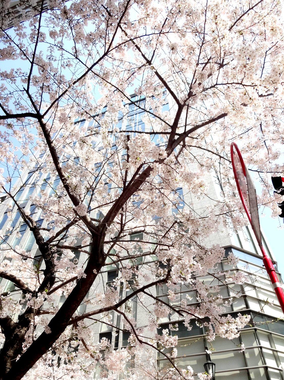 http://www.karimoku.co.jp/blog/domani-nihonbashi/DSC05852.JPG