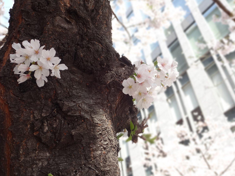 http://www.karimoku.co.jp/blog/domani-nihonbashi/DSC05859.JPG