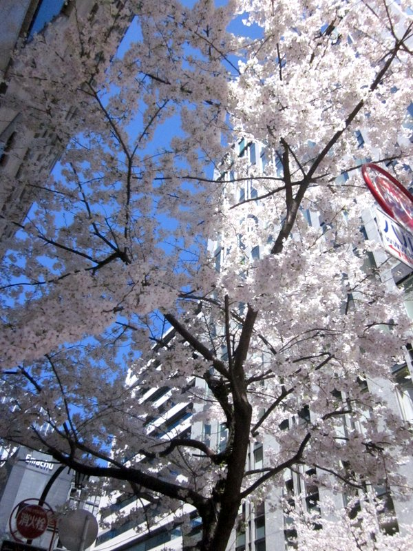 http://www.karimoku.co.jp/blog/domani-nihonbashi/IMG_3571-001.JPG