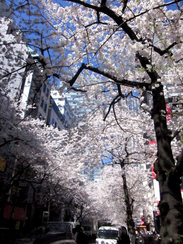 http://www.karimoku.co.jp/blog/domani-nihonbashi/IMG_3576-001.JPG